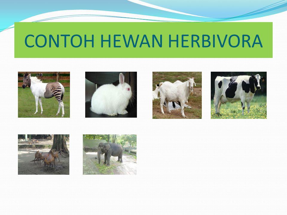 HEWAN HERBIVORA Hewan Herbivora adalah hewan pemakan tumbuhan dan biji-bijian.