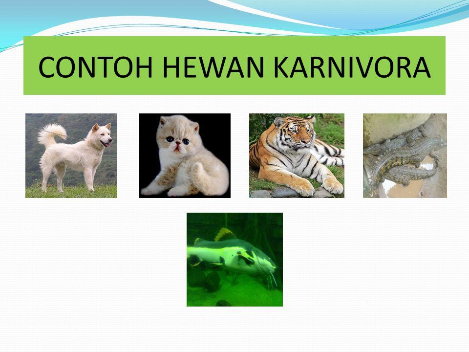 HEWAN KARNIVORA Hewan Karnivora adalah hewan pemakan daging Ciri-ciri hewan karnivora adalah : - Memiliki gigi seri yang digunakan untuk memotong daging - Memiliki gigi geraham digunakan untuk mengunyah daging - Gigi taring untuk menangkap dan mengoyak mangsanya
