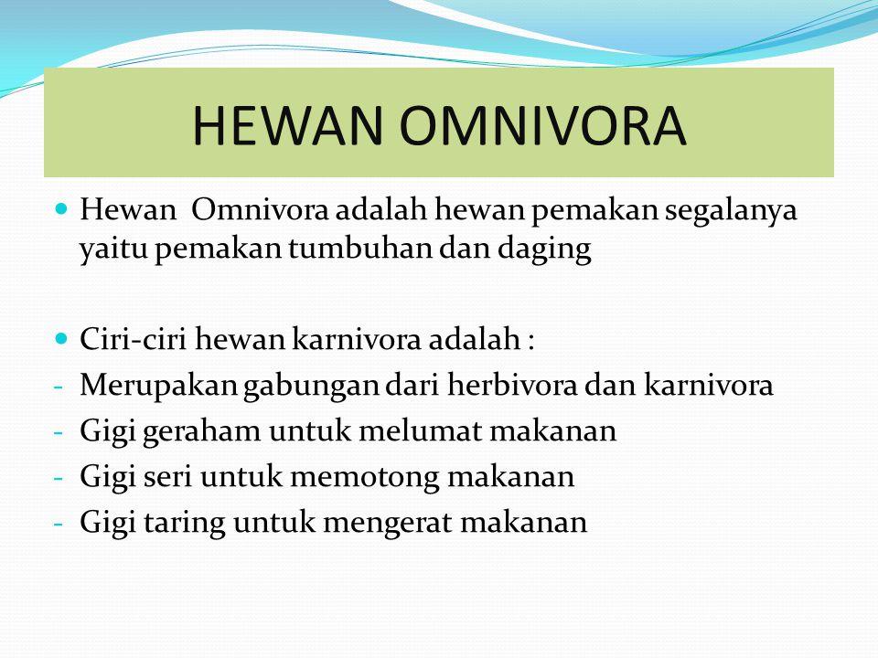 CONTOH HEWAN KARNIVORA
