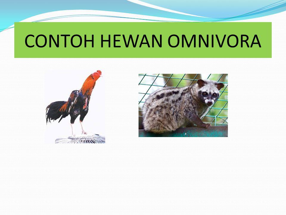 HEWAN OMNIVORA Hewan Omnivora adalah hewan pemakan segalanya yaitu pemakan tumbuhan dan daging Ciri-ciri hewan karnivora adalah : - Merupakan gabungan