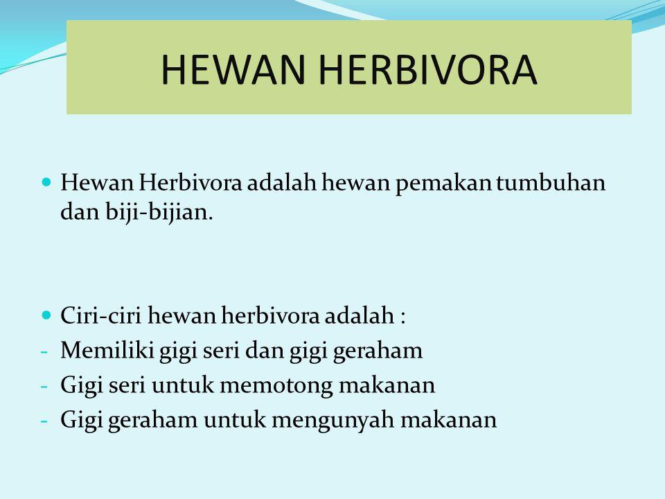 HEWAN HERBIVORAHEWAN KARNIVORAHEWAN OMNIVORA