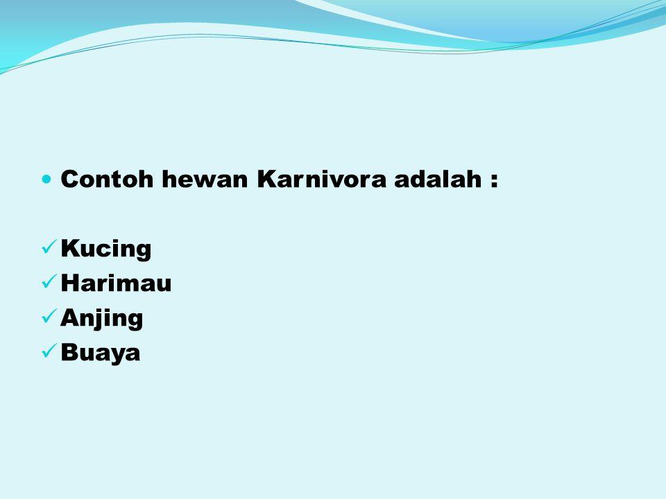 Contoh hewan Karnivora adalah : Kucing Harimau Anjing Buaya