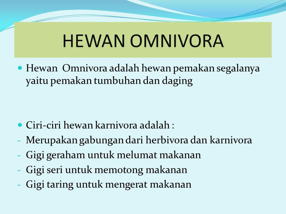 HEWAN OMNIVORA Hewan Omnivora adalah hewan pemakan segalanya yaitu pemakan tumbuhan dan daging Ciri-ciri hewan karnivora adalah : - Merupakan gabungan dari herbivora dan karnivora - Gigi geraham untuk melumat makanan - Gigi seri untuk memotong makanan - Gigi taring untuk mengerat makanan
