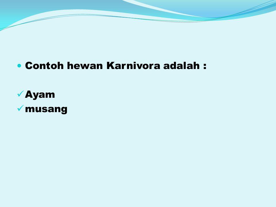 Contoh hewan Karnivora adalah : Ayam musang