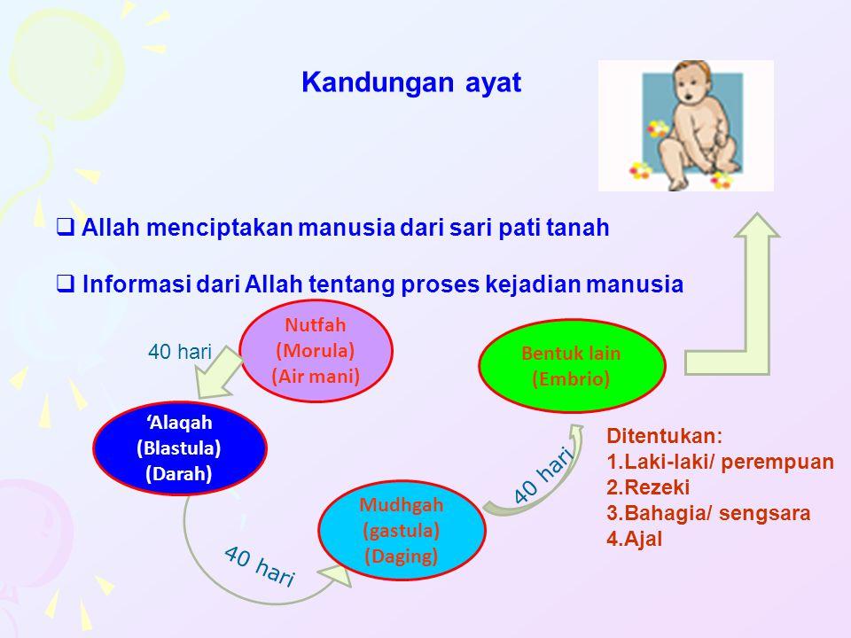Kandungan ayat  Allah menciptakan manusia dari sari pati tanah  Informasi dari Allah tentang proses kejadian manusia Nutfah (Morula) (Air mani) 40 h