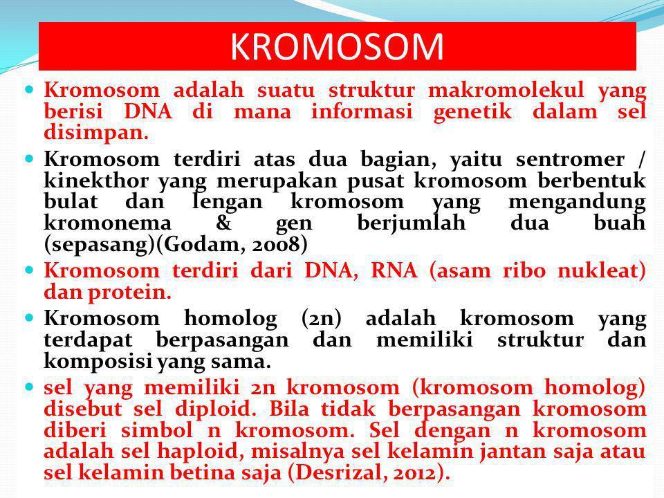 Kromosom adalah suatu struktur makromolekul yang berisi DNA di mana informasi genetik dalam sel disimpan.
