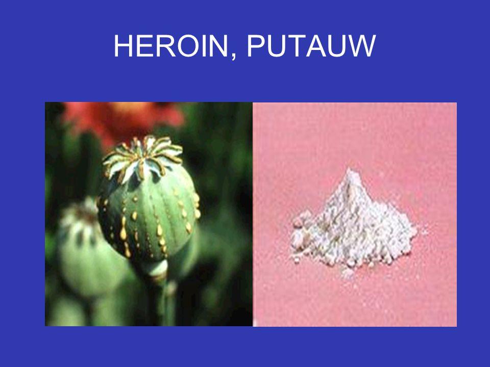 HEROIN, PUTAUW
