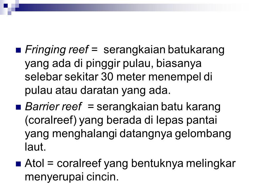 Fringing reef = serangkaian batukarang yang ada di pinggir pulau, biasanya selebar sekitar 30 meter menempel di pulau atau daratan yang ada. Barrier r