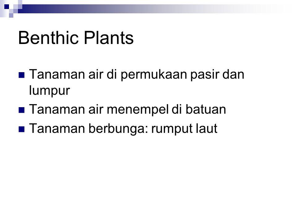 Benthic Plants Tanaman air di permukaan pasir dan lumpur Tanaman air menempel di batuan Tanaman berbunga: rumput laut