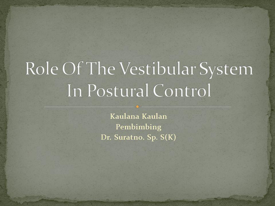 Sistem vestibular adalah salah satu sistem saraf yang mengontrol sikap tubuh vestibular gravitasi Stabilisasi kepala disaat pergerakan tubuh Pergerakan kepala Mengontrol pergerakan pada sumbu tubuh