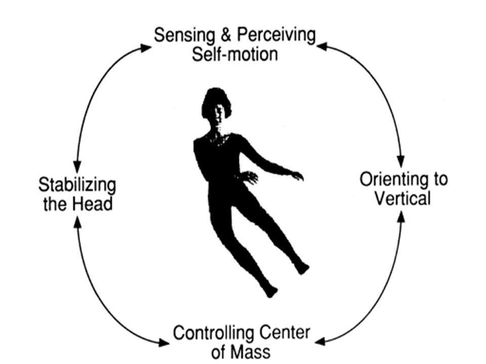 Sistem vestibular mempunyai 2 jenis sensor yaitu kanal semisirkularis dan otolith Kanal semisirkularis mengontrol gerakan rotasional Kanalis semisirkular Horizon tal frontal Sagital (berjalan)