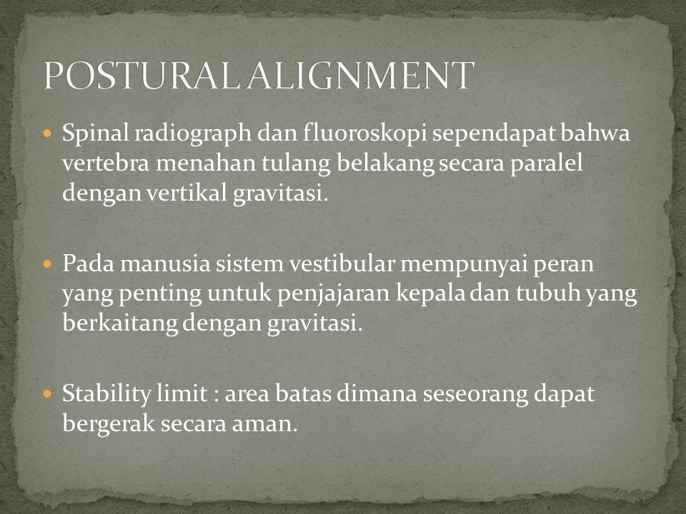 Spinal radiograph dan fluoroskopi sependapat bahwa vertebra menahan tulang belakang secara paralel dengan vertikal gravitasi. Pada manusia sistem vest