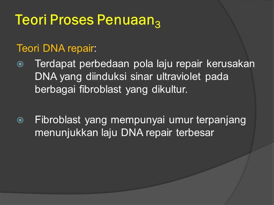 Teori Proses Penuaan 3 Teori DNA repair:  Terdapat perbedaan pola laju repair kerusakan DNA yang diinduksi sinar ultraviolet pada berbagai fibroblast