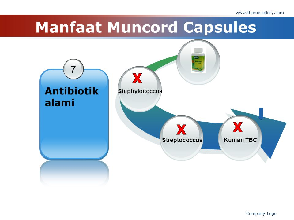 www.themegallery.com Company Logo Manfaat Muncord Capsules 7 Antibiotik alami StaphylococcusKuman TBCStreptococcus