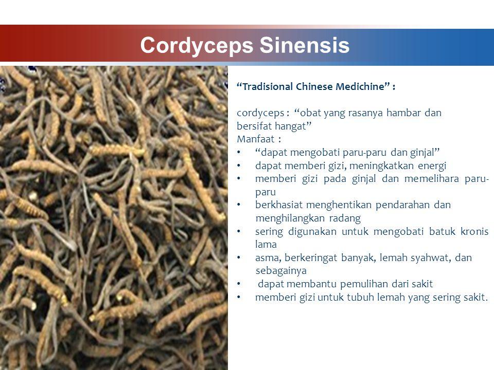 Cordyceps Sinensis Tradisional Chinese Medichine : cordyceps : obat yang rasanya hambar dan bersifat hangat Manfaat : dapat mengobati paru-paru dan ginjal dapat memberi gizi, meningkatkan energi memberi gizi pada ginjal dan memelihara paru- paru berkhasiat menghentikan pendarahan dan menghilangkan radang sering digunakan untuk mengobati batuk kronis lama asma, berkeringat banyak, lemah syahwat, dan sebagainya dapat membantu pemulihan dari sakit memberi gizi untuk tubuh lemah yang sering sakit.