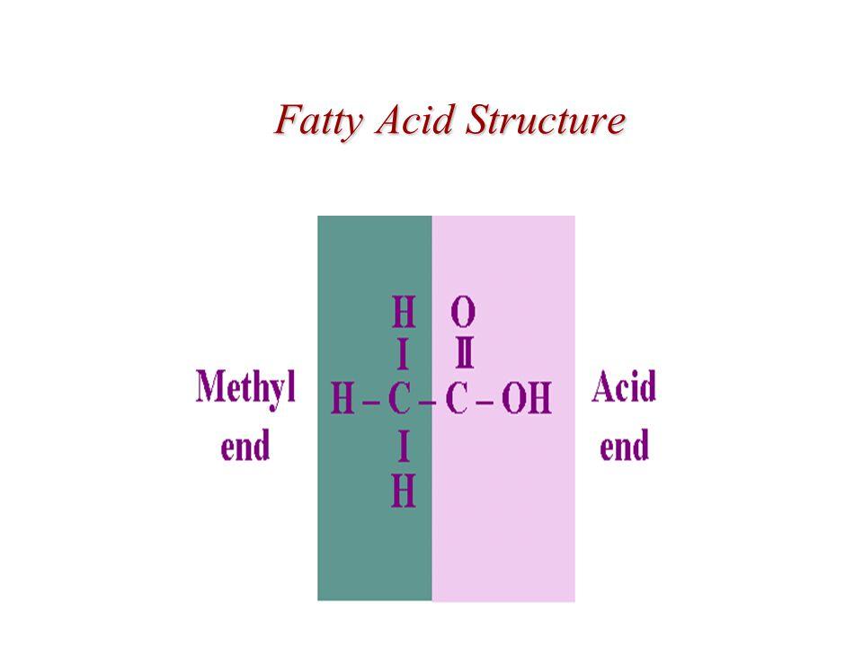 Fatty Acid Structure