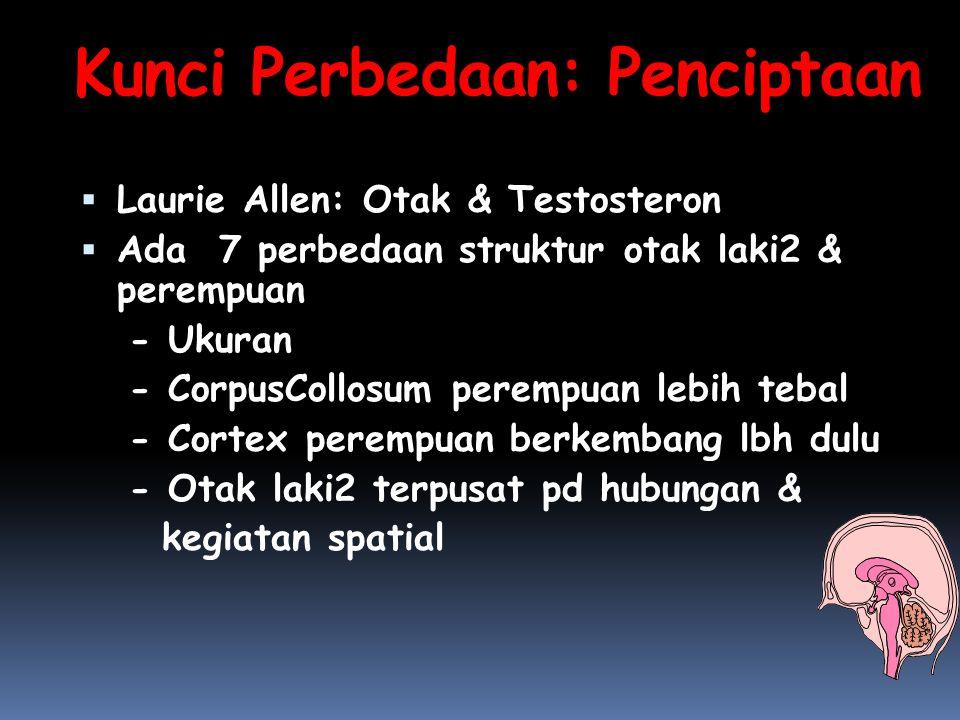 Kunci Perbedaan: Penciptaan  Laurie Allen: Otak & Testosteron  Ada 7 perbedaan struktur otak laki2 & perempuan - Ukuran - CorpusCollosum perempuan l