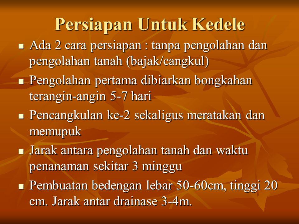Pengolahan Lahan Brambang Pupuk kandang (0.5-1 ton/1000m2) disebarkan di lahan Pupuk kandang (0.5-1 ton/1000m2) disebarkan di lahan Diluku dan digaru