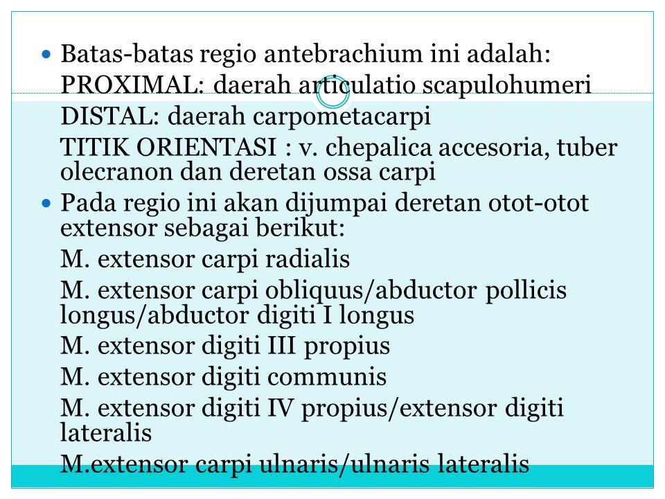 Batas-batas regio antebrachium ini adalah: PROXIMAL: daerah articulatio scapulohumeri DISTAL: daerah carpometacarpi TITIK ORIENTASI : v. chepalica acc
