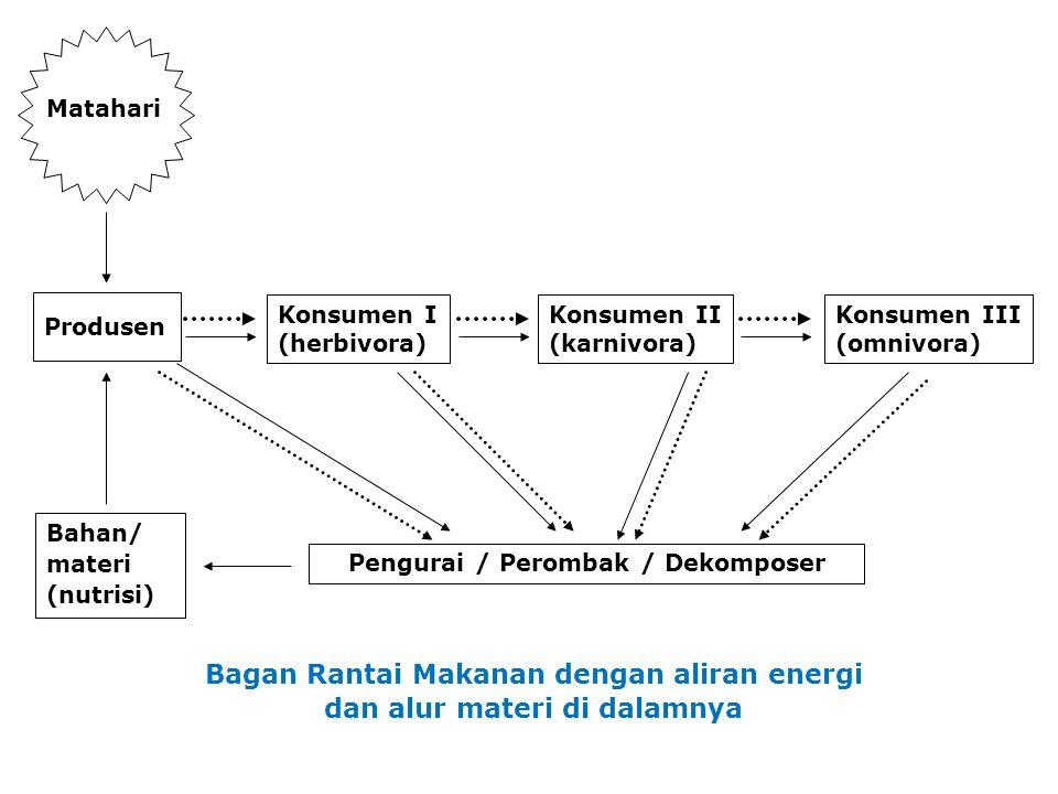 Bagan Rantai Makanan dengan aliran energi dan alur materi di dalamnya Matahari Produsen Konsumen I (herbivora) Konsumen II (karnivora) Konsumen III (omnivora) Bahan/ materi (nutrisi) Pengurai / Perombak / Dekomposer