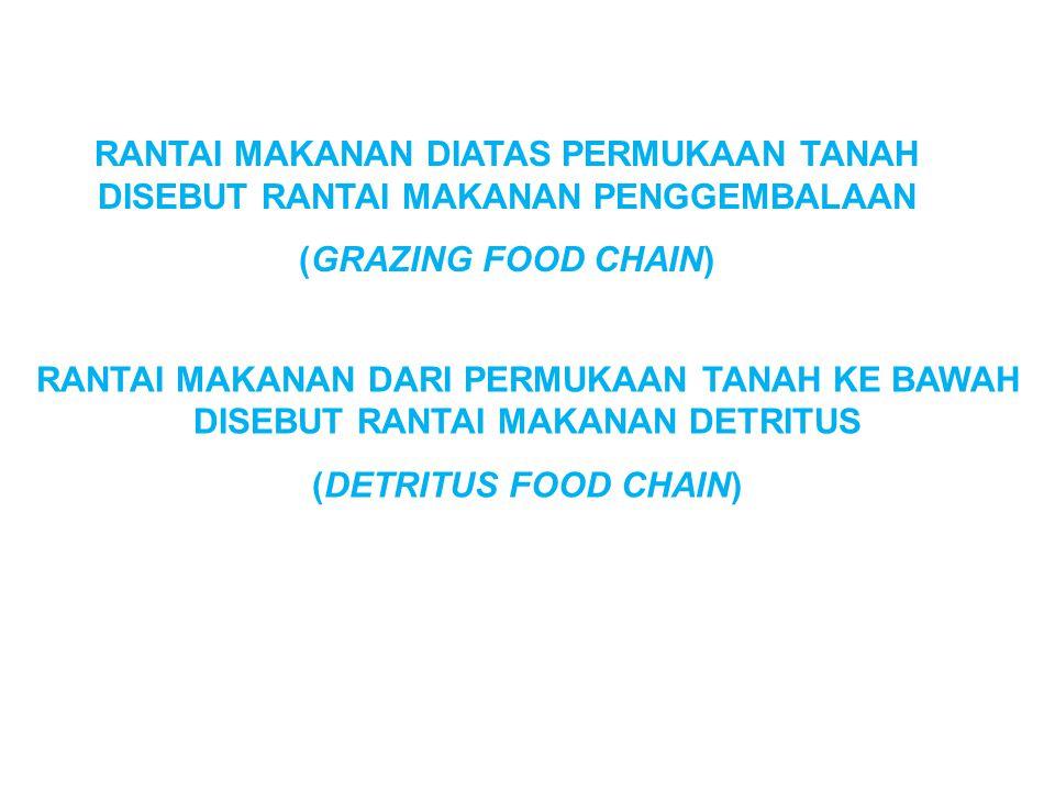 RANTAI MAKANAN DIATAS PERMUKAAN TANAH DISEBUT RANTAI MAKANAN PENGGEMBALAAN (GRAZING FOOD CHAIN) RANTAI MAKANAN DARI PERMUKAAN TANAH KE BAWAH DISEBUT RANTAI MAKANAN DETRITUS (DETRITUS FOOD CHAIN)