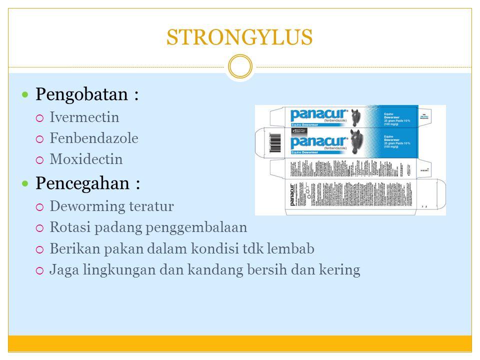 STRONGYLUS Pengobatan :  Ivermectin  Fenbendazole  Moxidectin Pencegahan :  Deworming teratur  Rotasi padang penggembalaan  Berikan pakan dalam