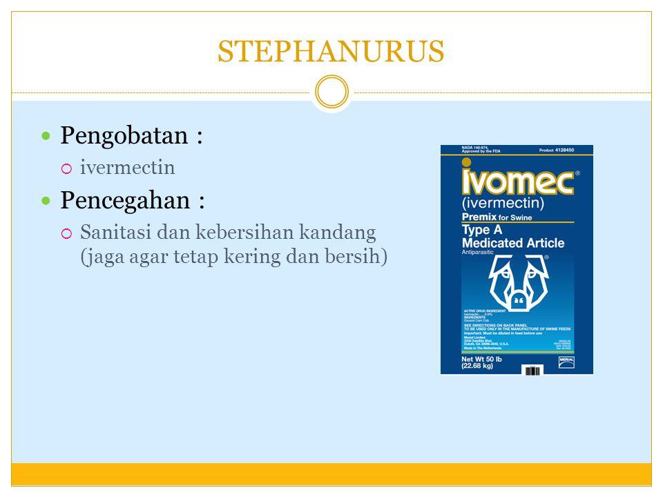 STEPHANURUS Pengobatan :  ivermectin Pencegahan :  Sanitasi dan kebersihan kandang (jaga agar tetap kering dan bersih)