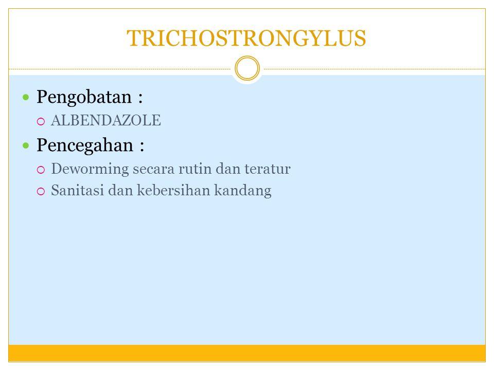 TRICHOSTRONGYLUS Pengobatan :  ALBENDAZOLE Pencegahan :  Deworming secara rutin dan teratur  Sanitasi dan kebersihan kandang