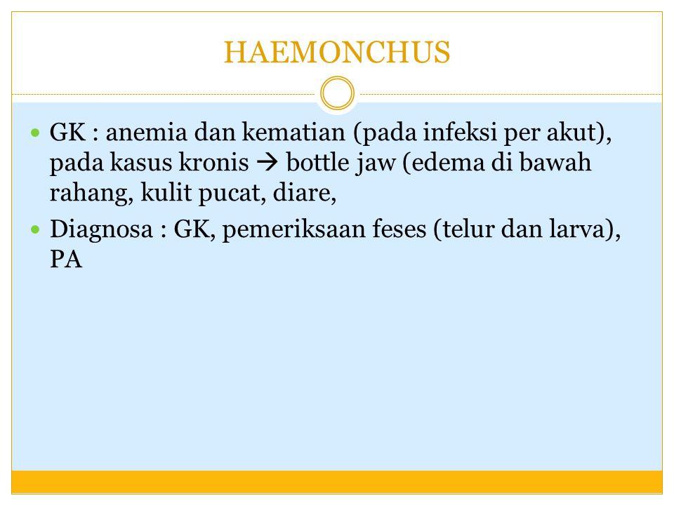 HAEMONCHUS GK : anemia dan kematian (pada infeksi per akut), pada kasus kronis  bottle jaw (edema di bawah rahang, kulit pucat, diare, Diagnosa : GK,