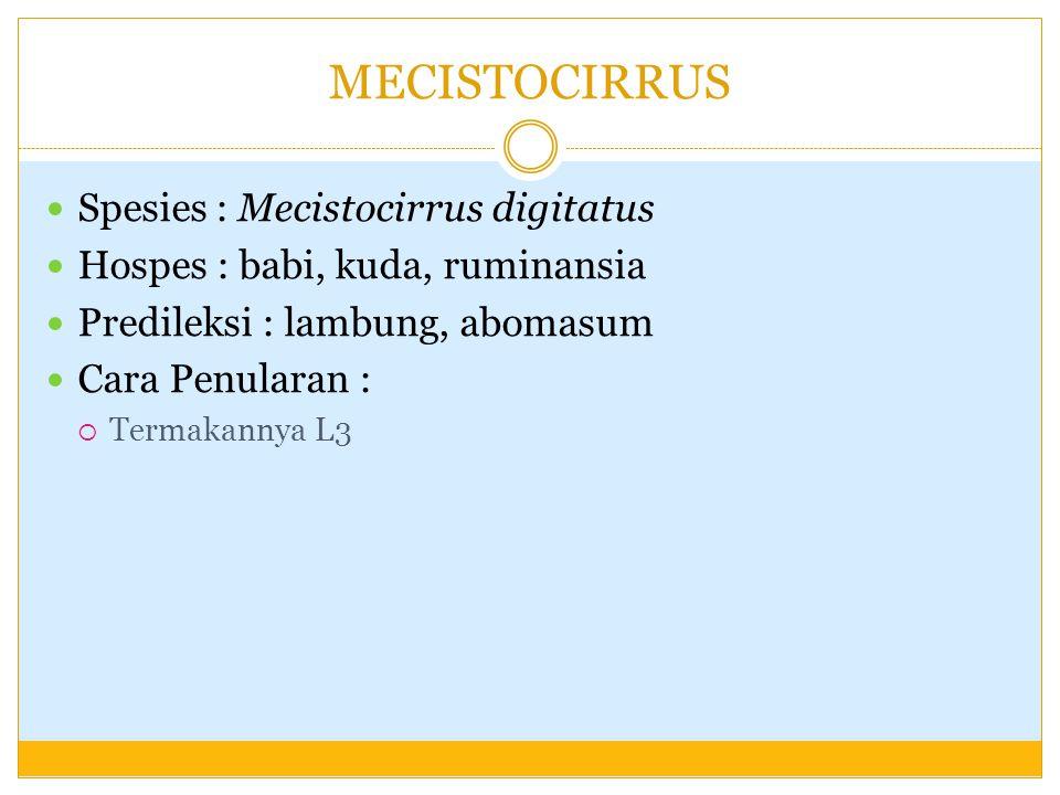 MECISTOCIRRUS Spesies : Mecistocirrus digitatus Hospes : babi, kuda, ruminansia Predileksi : lambung, abomasum Cara Penularan :  Termakannya L3