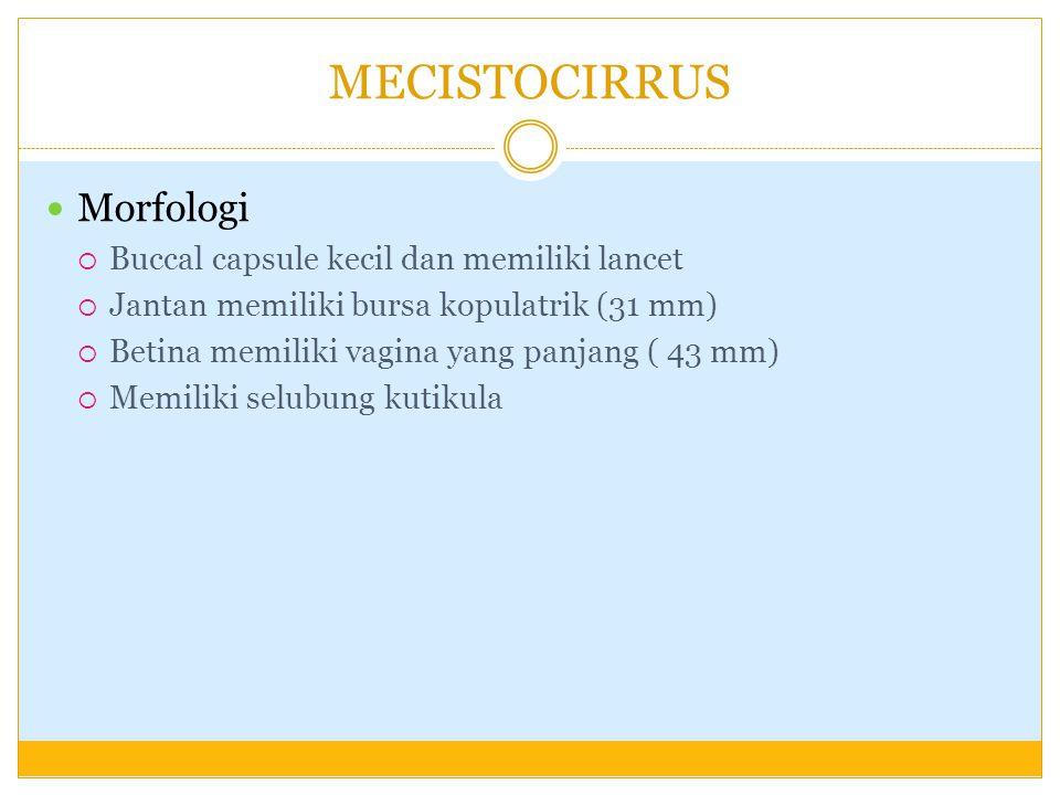 MECISTOCIRRUS Morfologi  Buccal capsule kecil dan memiliki lancet  Jantan memiliki bursa kopulatrik (31 mm)  Betina memiliki vagina yang panjang (