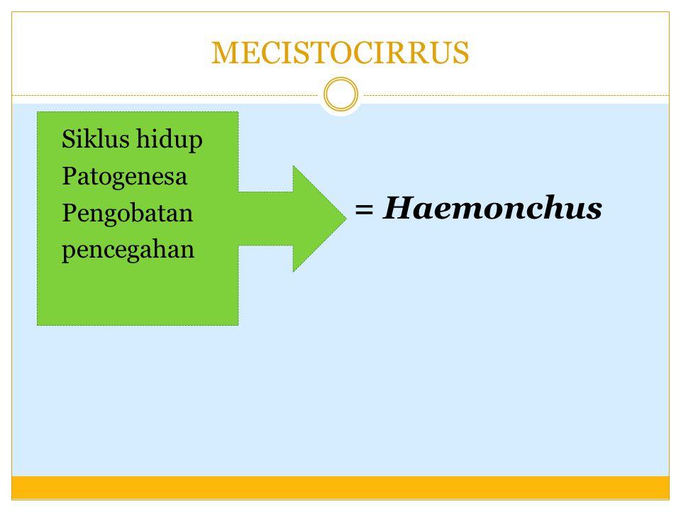 MECISTOCIRRUS Siklus hidup Patogenesa Pengobatan pencegahan = Haemonchus