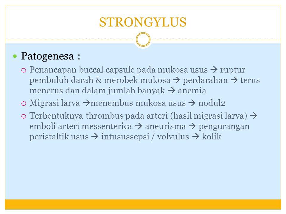 STRONGYLUS GK : anemia, diare, kolik pada kuda (infestasi berat), kulit kasar dan kusam, emasiasi, edema pada abdomen dan kaki Diagnosa : pemeriksaan feses, aneurisma (pelebaran arteri) pada A.