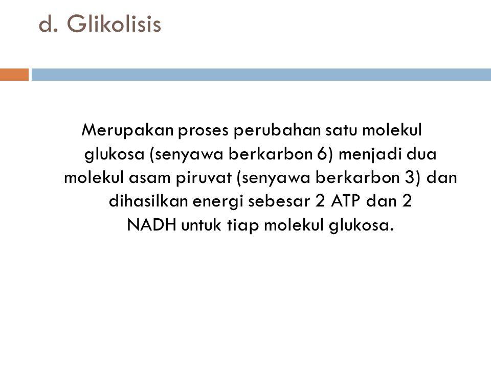 d. Glikolisis Merupakan proses perubahan satu molekul glukosa (senyawa berkarbon 6) menjadi dua molekul asam piruvat (senyawa berkarbon 3) dan dihasil