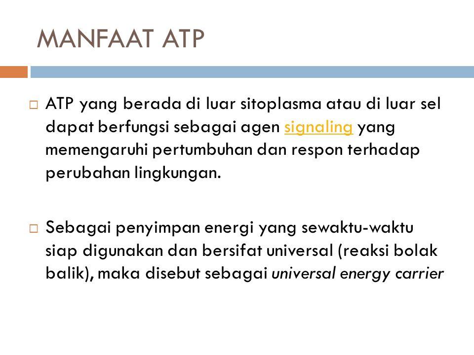 MANFAAT ATP  ATP yang berada di luar sitoplasma atau di luar sel dapat berfungsi sebagai agen signaling yang memengaruhi pertumbuhan dan respon terha