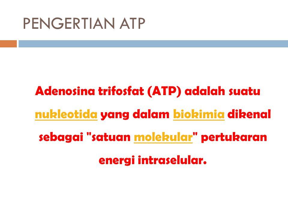 PENGERTIAN ATP Adenosina trifosfat (ATP) adalah suatu nukleotida yang dalam biokimia dikenal sebagai