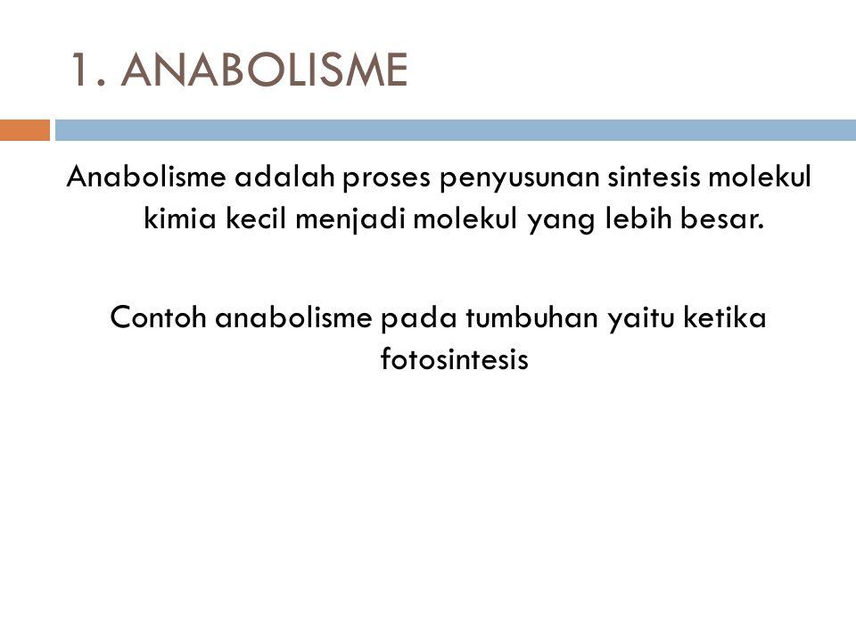 1. ANABOLISME Anabolisme adalah proses penyusunan sintesis molekul kimia kecil menjadi molekul yang lebih besar. Contoh anabolisme pada tumbuhan yaitu