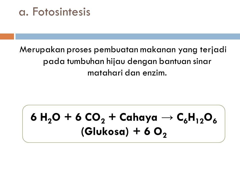 a. Fotosintesis Merupakan proses pembuatan makanan yang terjadi pada tumbuhan hijau dengan bantuan sinar matahari dan enzim. 6 H 2 O + 6 CO 2 + Cahaya