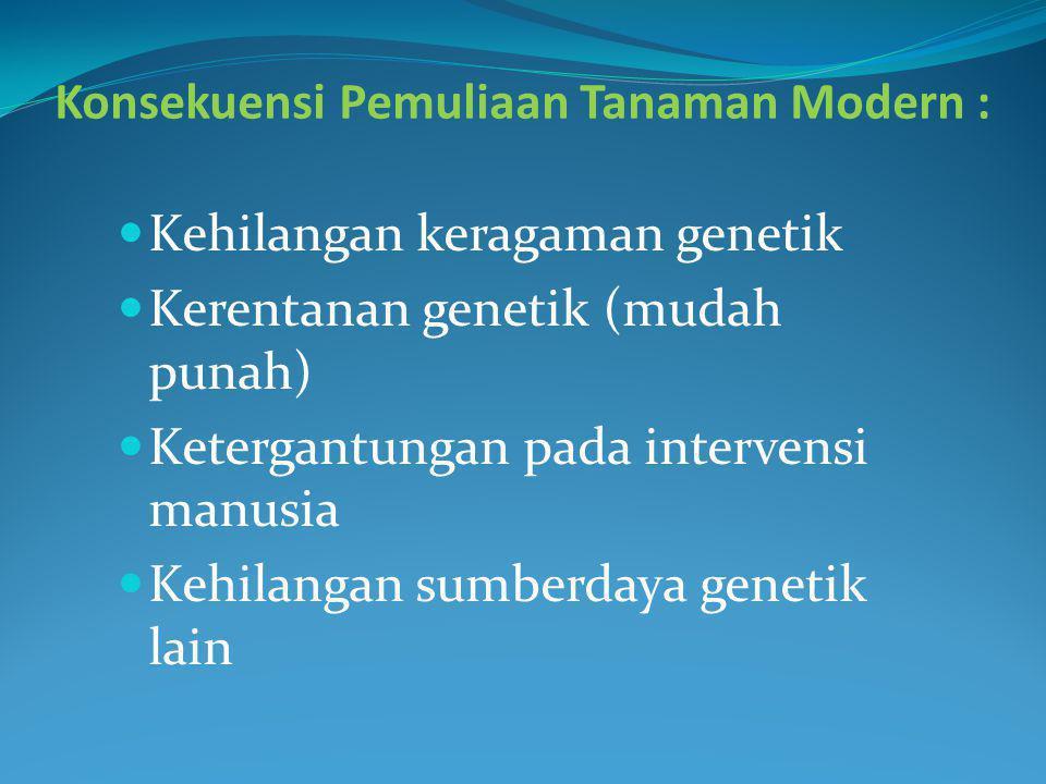 Konsekuensi Pemuliaan Tanaman Modern : Kehilangan keragaman genetik Kerentanan genetik (mudah punah) Ketergantungan pada intervensi manusia Kehilangan