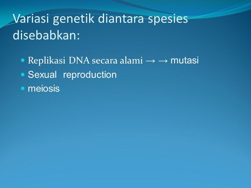 Variasi genetik diantara spesies disebabkan: Replikasi DNA secara alami → → mutasi Sexual reproduction meiosis