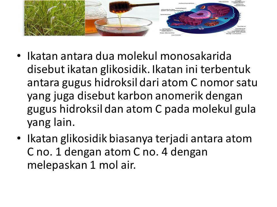 Ikatan antara dua molekul monosakarida disebut ikatan glikosidik. Ikatan ini terbentuk antara gugus hidroksil dari atom C nomor satu yang juga disebut