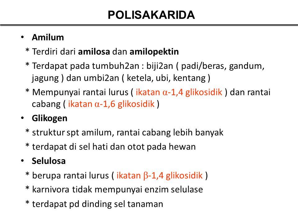 Amilum * Terdiri dari amilosa dan amilopektin * Terdapat pada tumbuh2an : biji2an ( padi/beras, gandum, jagung ) dan umbi2an ( ketela, ubi, kentang )