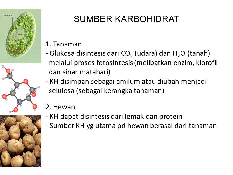 SUMBER KARBOHIDRAT 1. Tanaman - Glukosa disintesis dari CO 2 (udara) dan H 2 O (tanah) melalui proses fotosintesis (melibatkan enzim, klorofil dan sin