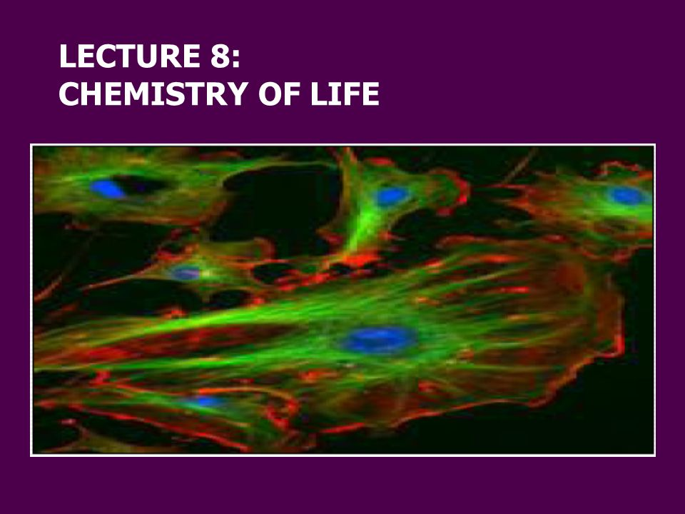 LECTURE 8: CHEMISTRY OF LIFE
