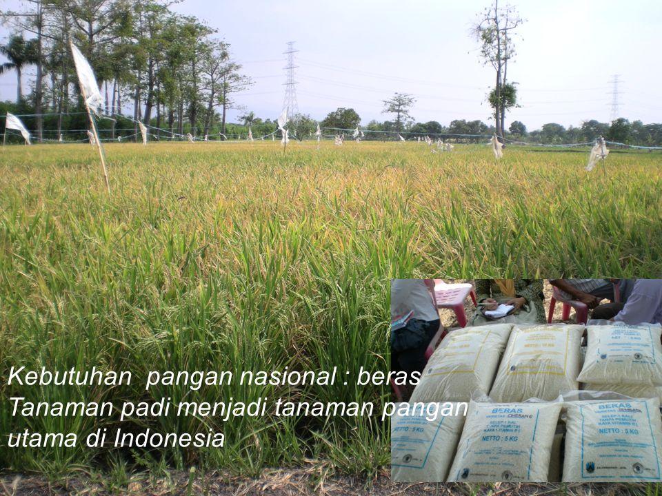 Kebutuhan pangan nasional : beras Tanaman padi menjadi tanaman pangan utama di Indonesia