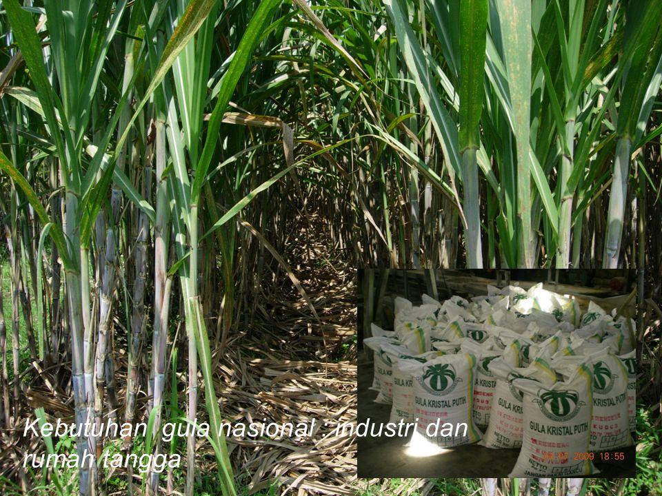 Kebutuhan gula nasional : industri dan rumah tangga