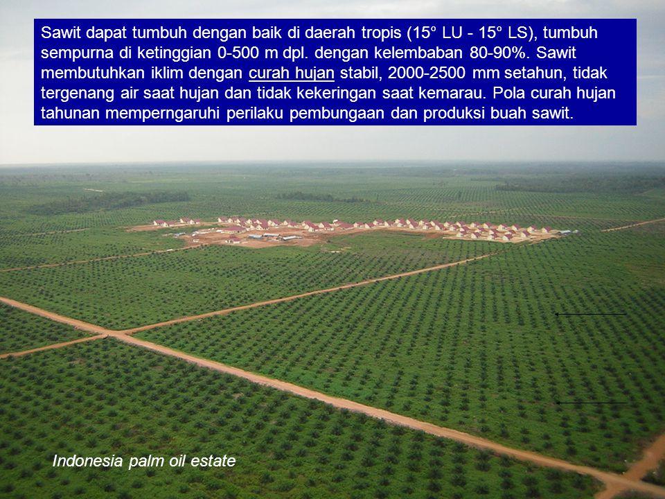 Indonesia palm oil estate Sawit dapat tumbuh dengan baik di daerah tropis (15° LU - 15° LS), tumbuh sempurna di ketinggian 0-500 m dpl. dengan kelemba