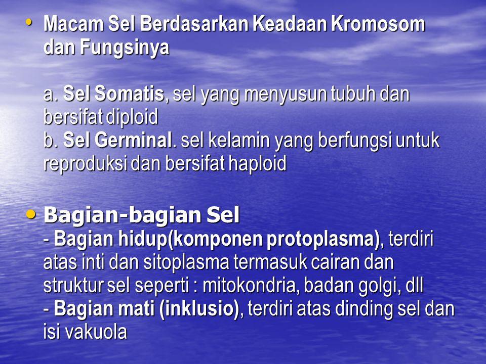 Macam Sel Berdasarkan Keadaan Kromosom dan Fungsinya a. Sel Somatis, sel yang menyusun tubuh dan bersifat diploid b. Sel Germinal. sel kelamin yang be