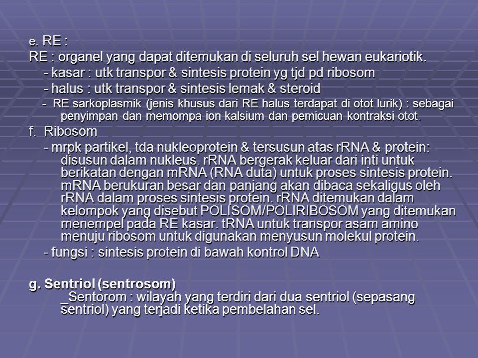 e. RE : RE : organel yang dapat ditemukan di seluruh sel hewan eukariotik. - kasar : utk transpor & sintesis protein yg tjd pd ribosom - kasar : utk t