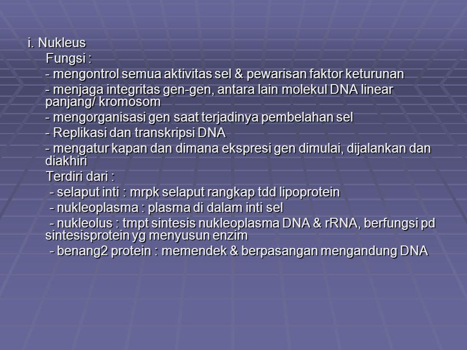 i. Nukleus Fungsi : Fungsi : - mengontrol semua aktivitas sel & pewarisan faktor keturunan - menjaga integritas gen-gen, antara lain molekul DNA linea